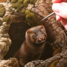 Weasel/Ermine finishing up for exhibition at the upcoming show with Seaside Art Gallery in November watercolor on board Rebecca Latham  #wildlife #watercolor #art #animal #painting #miniature #artist #miniatureart #realism #animallovers #workinprogress #naturalism #NC #OBX #northcarolina #gallery #exhibition #weasel #ermine