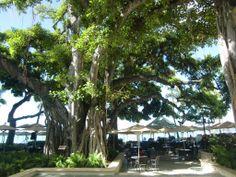Moana Surfrider Waikiki Moana Surfrider, Hawaii Hotels, Past, Surfing, Future, Amazing, Travel, Past Tense, Future Tense