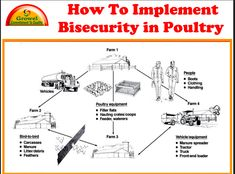 Bio-Security plan is a set of practices designed to prevent the entry and spread of infectious diseases into and from a poultry farm. Biosecurity requires the …