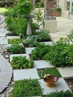 Lets play plant checkers! #barbschwarzblog #barbschwarzgarden #barbschwarz