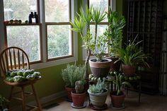 Des plantes dépolluantes pour purifier l'air de la maison