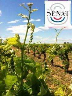 Le Sénat reconnait que le vin fait partie du patrimoine français