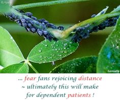 ... #fear fans rejoicing #distance ~ ultimately this will make for dependent #patients ! ( #Samara )