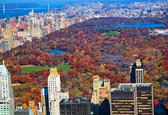 From above: Last hurrah for fall foliage in Central Park this season.