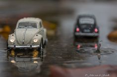 Two beetles in the rain