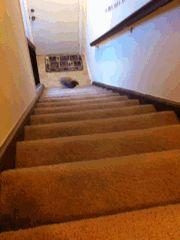 La carotte, ça le botte ! Il fonce dans les escaliers avec ses petits pieds !!!