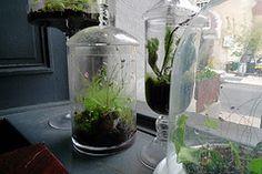 Cómo hacer un ecosistema en una botella | eHow en Español