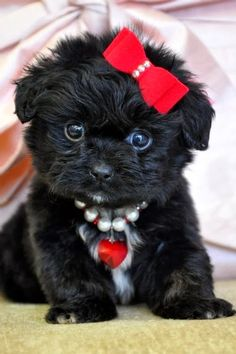 Little black adorable puppies you must see