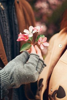 Gay Aesthetic, Autumn Aesthetic, Aesthetic Images, Hand Photography, Spring Photography, Happy Flowers, Beautiful Flowers, Girl Hand Pic, Black Background Wallpaper