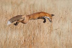 """Wildlife Photographer of the Year"" Connor Stefanison"