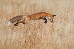 """Wildlife Photographer of the Year"" Connor Stefanison"