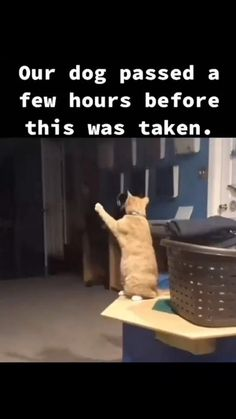 Funny Animal Jokes, Funny Animal Videos, Animal Memes, Funny Dogs, Super Cute Animals, Cute Little Animals, Cute Funny Animals, Cute Cats, Baby Animals Pictures