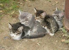 Train de chats