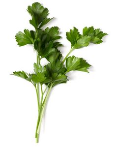"""Parsley/Salsa: the Portuguese call it """"salsa"""" like the dance! But I don't think there's any reference to it...  Anyway, if you're cooking Portuguese food, make sure you have some of this herb."""