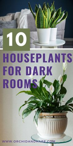 10 BEST House Plants for Dark Rooms - Find out which are the best indoor plants for low light conditions (like when there is no sunlight). These plants (like the Peace Lily) thrive in planters or pots Indoor Plants Low Light, Best Indoor Plants, Cool Plants, Mint Plants, Low Light Houseplants, Potted Plants, Cactus Plants, Garden Plants, Plants For Planters