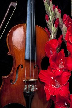Violin Art - Violin and gladiolus by Garry Gay Violin Instrument, Violin Art, Honey Bee Tattoo, Violin Photography, Violin Lessons, Music Pictures, Gladiolus, Art Pages, Music Lovers