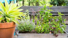 DIY Wine Box Herb Garden