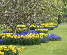 fantasical-flower-beds-4.jpg (550×453)