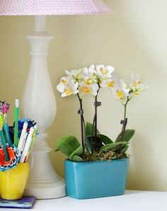 I just bought a miniature orchid for my bedroom.   I must have one for my office.  So beautiful.   Love.