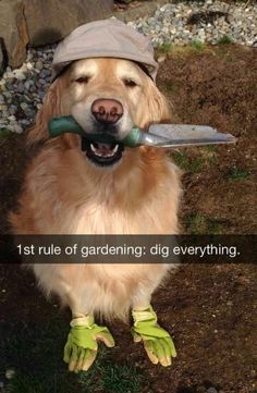 I've got a digger dog in my pack that follows this rule, for sure!