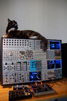 機材と猫が一緒に写った写真を集めたサイト、「SynthCats」。素晴らしいサイトです ^^ SynthCats http://synthcats.com/