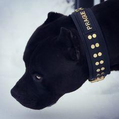 Cat And Dog Photos, Pit Dog, Cane Corso Dog, Pitt Bulls, Doberman Dogs, Labrador Retriever Dog, Bull Terrier Dog, Cute Animals, Animals Dog