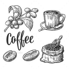 Sack with coffee beans with wooden scoop and beans, cup, branch with leaf and berry. Hand drawn sketch style. Vintage vector engra