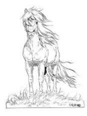 Lena Furberg horses Iceland horse