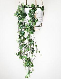 Easy Houseplants For Indoor Plants - decoratoo Vertical Garden Design, Vertical Gardens, Hanging Plants, Indoor Plants, Hanging Gardens, Hanging Baskets, Garden Ideas To Make, Garden Tips, Plant Decor