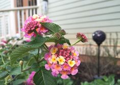 When the mercury rises, lantana is a colorful bloom that can the heat and a variety of conditions. It's the perfect choice and in some regions comes back year after year. Learn about more plants that can take the heat on The Home Depot's Garden Club blog.