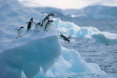 Countries around the world came together in the name of conservation this week. Dozens of nations passed an agreement that sets aside more than 1.5 million square kilometres (932,000 square miles) of the Ross Sea in Antarctica as the world's largest marine protected area (MPA) after five years of