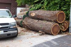 Black Walnut Tree, Walnut Timber, Wood Kiln, Kiln Dried Wood, Wood Logs, Raw Wood, Chainsaw Mill, Natural Wood Furniture, Tree Logs