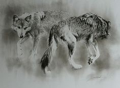 wolf, Mexican wolves - Painting Art by Susie Gordon Wolf Painting, Painting Art, Nature Artists, Wildlife Art, Habitats, Mexican, Sketches, Charcoal, Wolves Art
