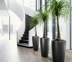 People love to decorate their house with various indoor plants. Make your home more beautiful by decorating interior Gardening which is also good for your health.  #Realtyfolks #InteriorGardening #gardening