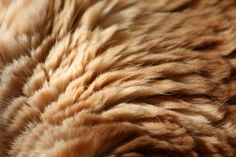 ?????????? ???, texture fur, brown fur texture background, background