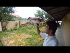 Shark eats tourist in Cambodia