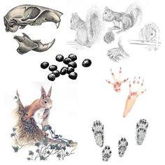 Nature Activities, Sensory Activities, Learning Activities, Mammals, Squirrel, Illustrations, Rooster, Kindergarten, Wildlife
