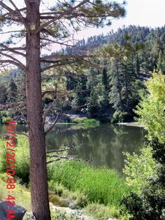 Jackson lake angeles national forest wrightwood camping for Camping cabins near los angeles