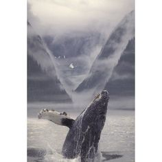 Composite Humpback Whale Breaching With Mist-Covered Mountains In The Background Of The Alexander Archipelago Of Southeast Alaska Composite Canvas Art - Ron Sanford Design Pics (11 x 17)