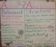 physiological ecology essay Commentary: what is physiological ecology  an essay of 250 words enforces a dogmatic approach, and the following observations about animal physiological ecology .