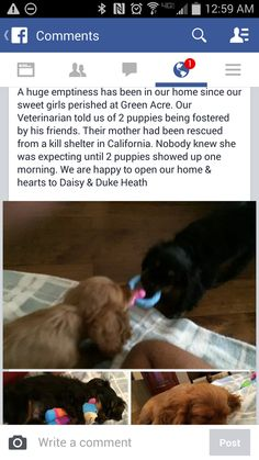 @CBS5AZ A victim of #GreenAcre has opened their home & heart to rescue 2 pups #Gilbert23 FB