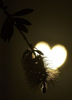 ハート型の太陽 ゆっくりと太陽に月の影が入り込み、ハート型に!自然の神秘  2012、3月のロサンゼルスでの日食の様子。