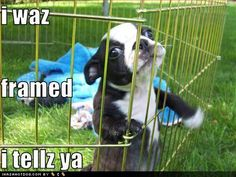 cute puppies with captions | Mortimer+cute-puppy-pictures-puppy-was-framed.jpg