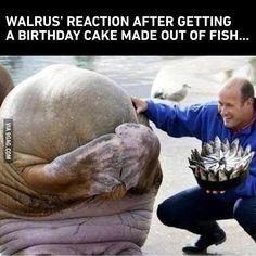 That's so cute #9gag #aww #cute #walrus @9gagmobile by 9gag