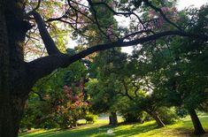 Vista del parque emblemático de Ranelagh febrero 2020 - Ranelagh, Berazategui, Buenos Aires Plants, February, Buenos Aires, Parks, Flora, Plant, Planting