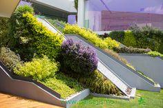 Ecosistema vertical compuesto por 13 muros verdes: un año y medio después de su plantación