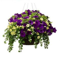 Early Spring Basket 2 Recipe Plant List and Instructions. For seed giveaways, daily tips and plant info, come join us on facebook! https://www.facebook.com/thegardengeeks