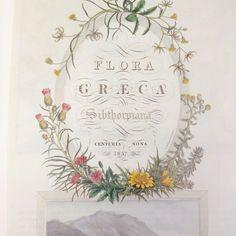 delicate greek floral border