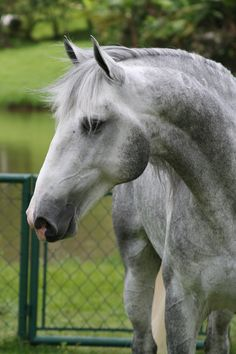 Horse / thebarebonesofdressage: This kind face needs to be reblogged. Beautiful