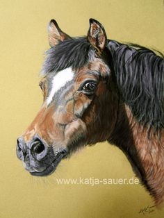 Pferdezeichnungen und Pferdeportraits in Pastellkreide - Pony - Tierzeichnungen und Tierportraits von Katja Sauer / Horse drawings and horse portraits in soft pastels - Animal paintings and animal portraits by Katja Sauer